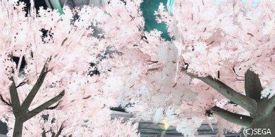 4月といえばお花見(去年の桜ロビー)